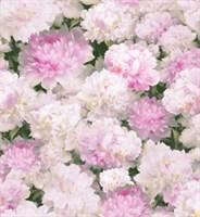 Обои бумажные дуплекс Максима 645-03 розовые (Саратов) (12)